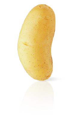 Pomme de Terre Annabelle