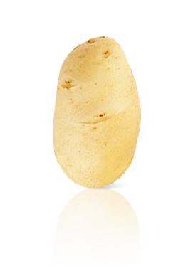 Pomme de Terre Challenger
