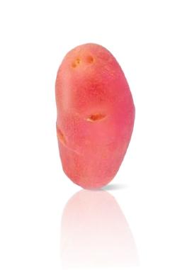 Pomme de Terre Franceline