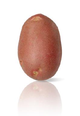 Pomme de Terre Mozart