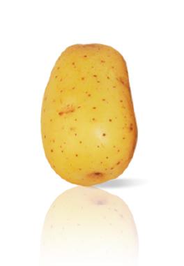 Pomme de Terre Sirco
